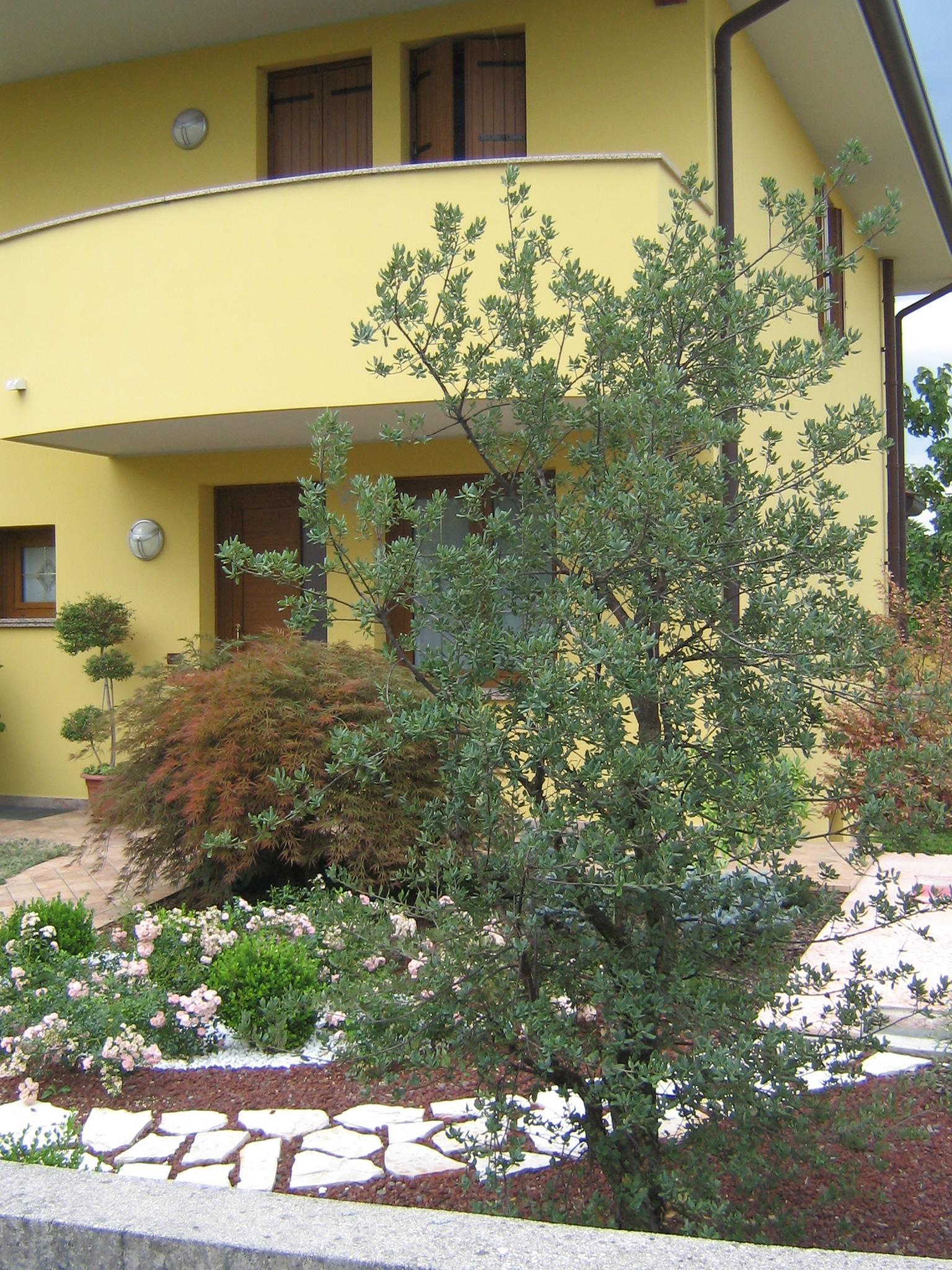 Giardino senza erba - Idee giardino senza erba ...